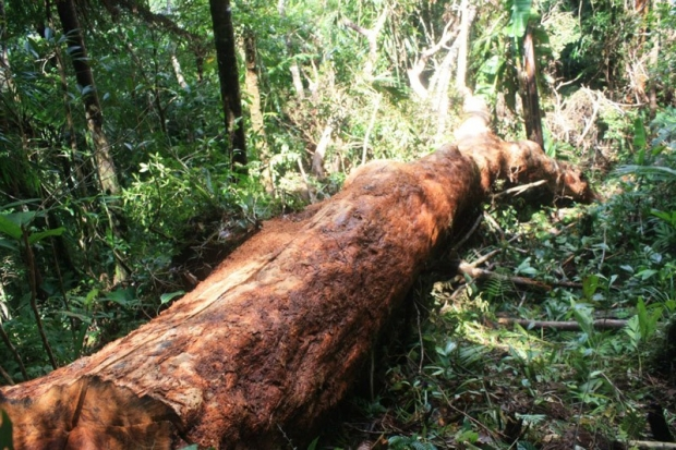 Illegal logging - Biliran Picture Gallery - sights and ...