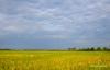 Caibiranricefield-11.jpg